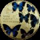 多様化-蝶-